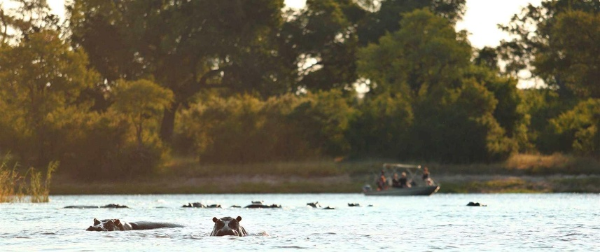 Listen to the hippos laugh bounce across the water and welcome you to the Zambezi