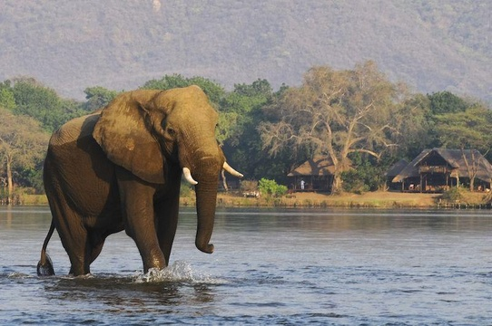 The heart and soul of Africa - experience a safari